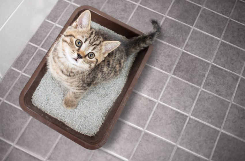 Best Cat Litter UK – Top 10 Cat Litters Reviewed