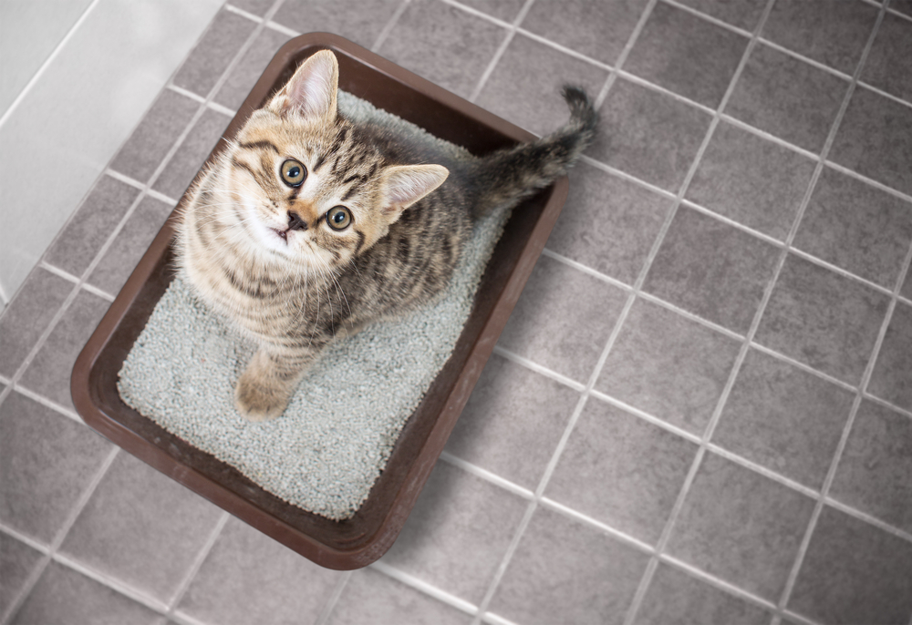 cat on best cat litter uk