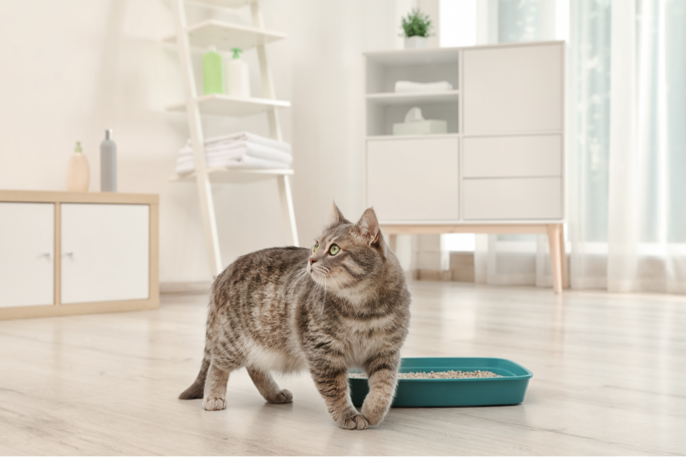 cat in front of best cat litter uk
