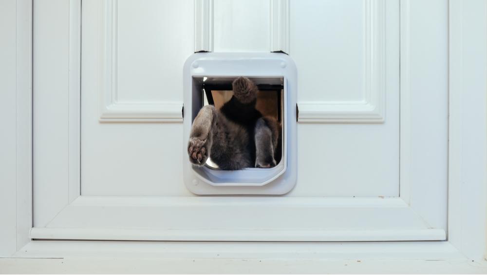 cat entering house via best microchip cat flap