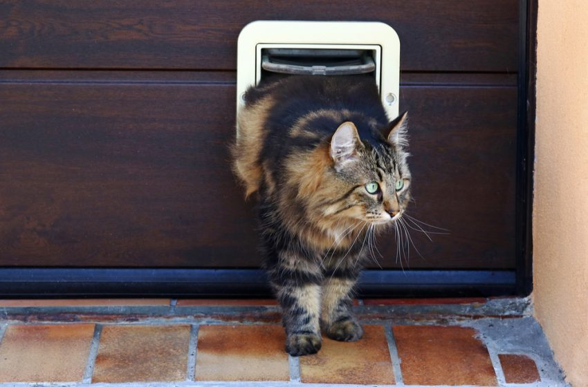 Best Microchip Cat Flap – UK Review