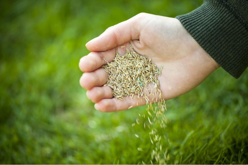 spreading best grass seed uk