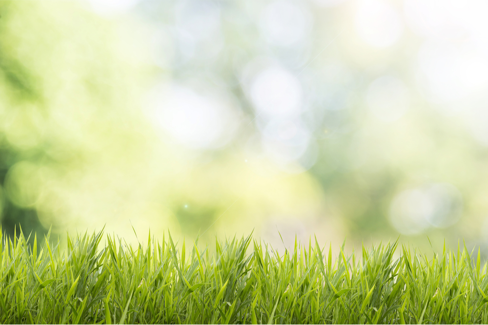 best grass seed uk lawn